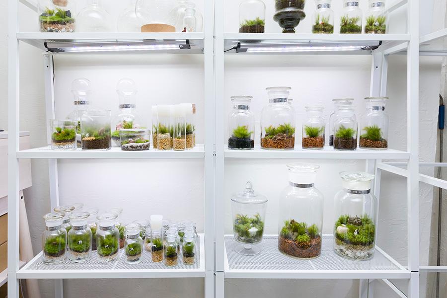 『Feel The Garden』内には、様々な苔のテラリウムがKEEPされている。