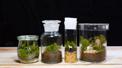 苔のテラリウムを作る -1  ボトルの中で完結する 小さな緑の世界