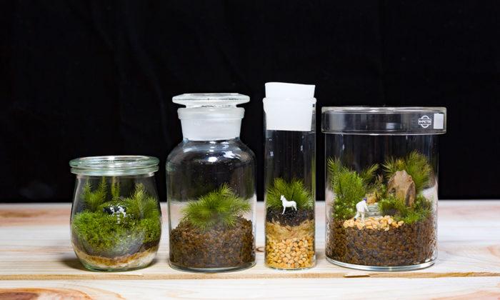 苔のテラリウムを作る -1ボトルの中で完結する小さな緑の世界