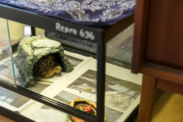 横溝さんの大事な家族、ホシガメのホシくんのおうち。暖かい場所が原産地のホシくん、寒い時期に停電になった時はとても心配したそう。