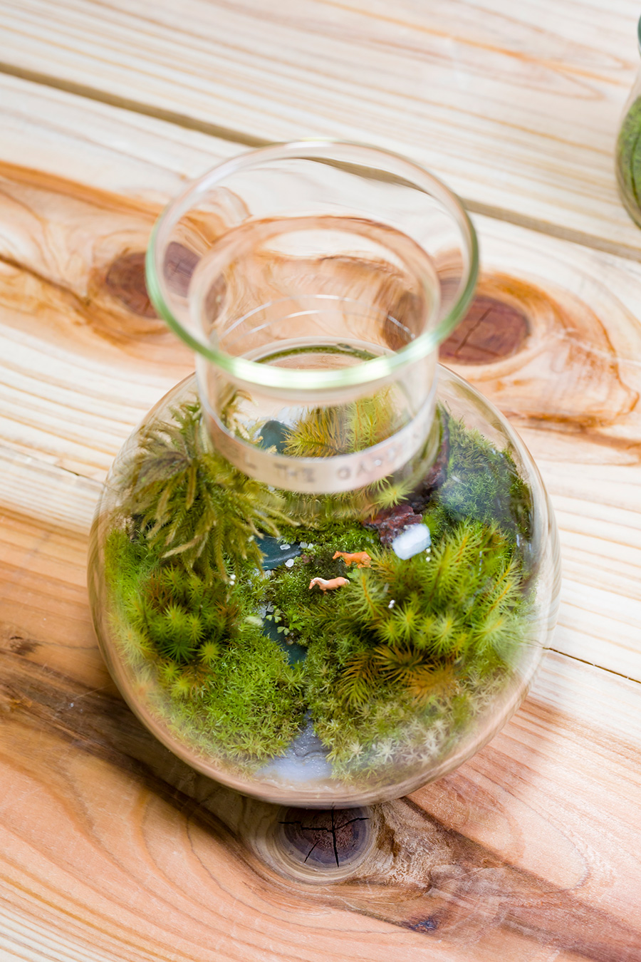 馬が川に水を飲みに来た? そんな苔のテラリウムを机の上に飾ってみたい。