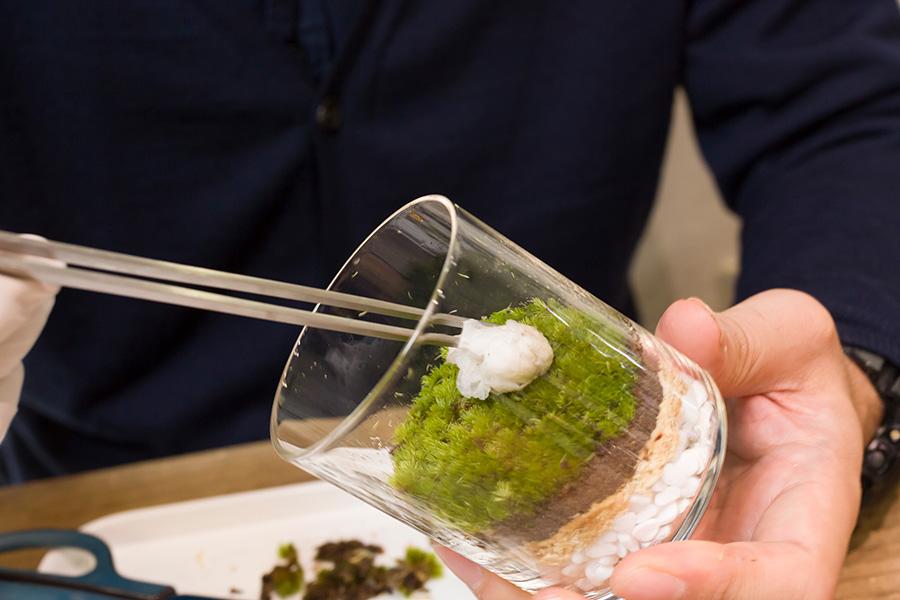 キムワイプ』(実験室などでよく使われるケバの残らない紙)などを丸めて、上から苔を優しく押さえながらなじませ、同時に余分な水分を取り除く。