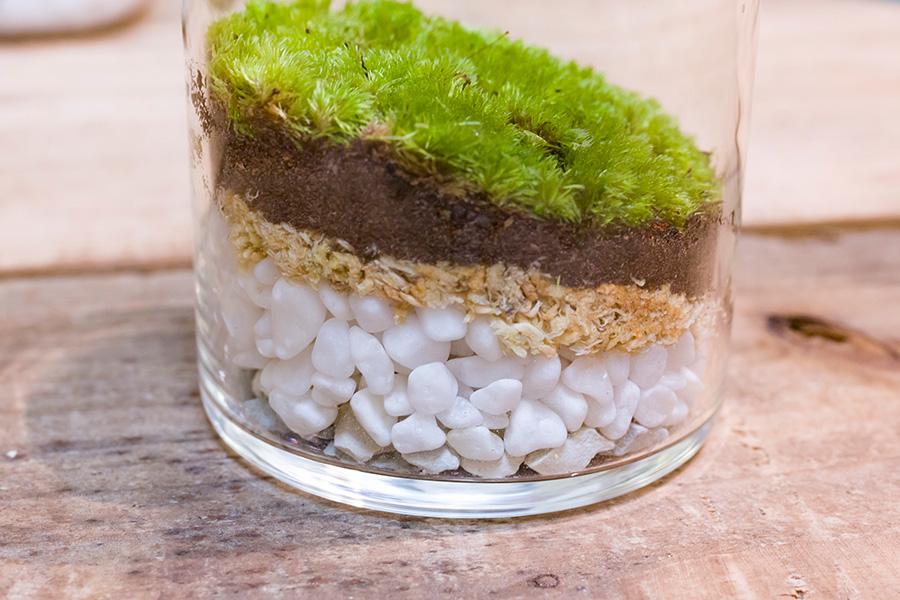 美しい用土の層と苔のグランドカバーが完成。密閉した容器の中で水分が循環し、苔は光合成しながら成長する。