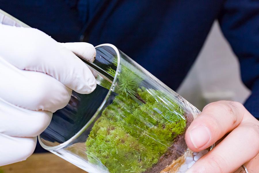 ヒノキゴケを植える。植えたい場所にピンセットで穴を開け、その穴に数本まとめたヒノキゴケを植える。