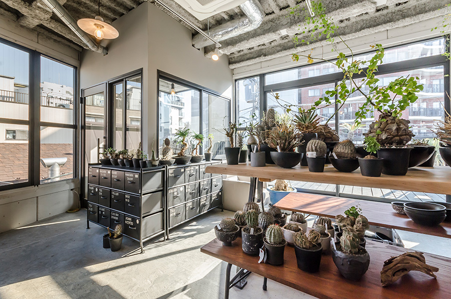 光がたくさん差し込む「Botanize」の店内。ユニークな表情の塊根植物は、見ているうちにはまりそう。