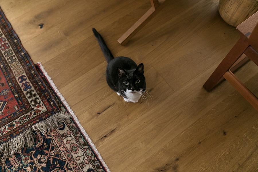 里親会で出会ったウズラちゃんは9歳の雄。床は幅広のオーク材を張った。