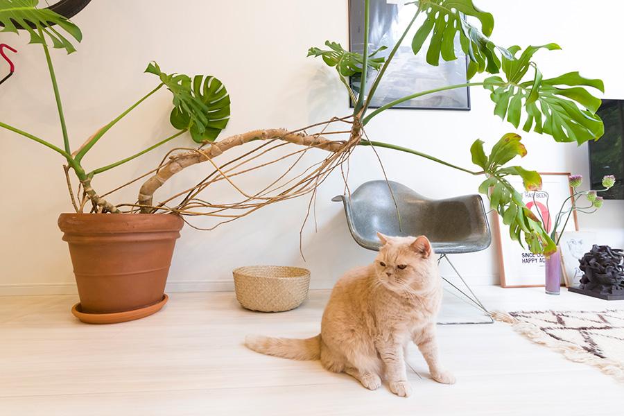 チャイくんの後ろのモンステラは、存在感のある樹形が気に入ったのだそう。「ショップの植栽をお願いしている方に、シンボルツリーになるような植物を時間をかけて探していただきました」