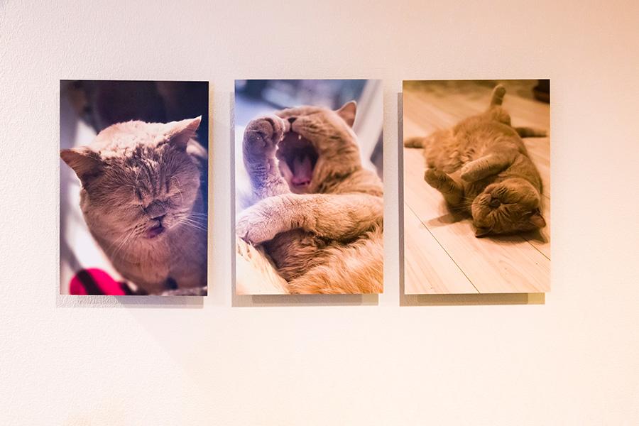 フジフィルムの写真をパネル加工するウォールデコというサービスを使って、チャイくんの写真を壁に。