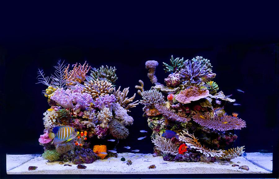 珊瑚礁を切り取ったような色とりどりの魚が泳ぐ。特に海水魚は飼育技術が年を追うごとに向上している。