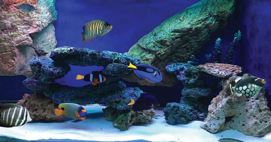魚だけの水槽。水質への要求度が低いので、海水魚飼育を始めるなら、まずは魚だけでスタートしたい。