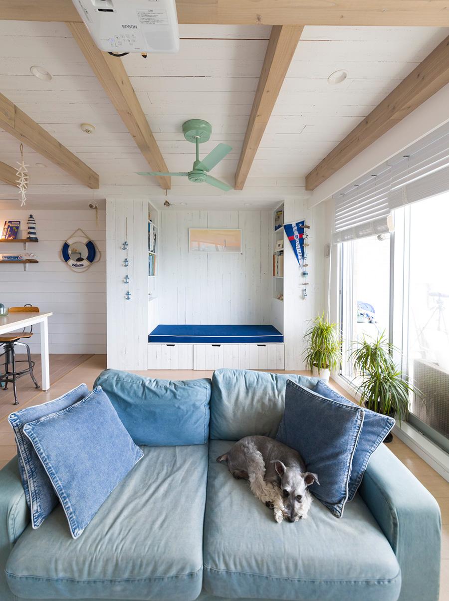 デニムのソファでくつろぐスキャンプ君(8歳)は、ヨットにも乗る海の男だ。