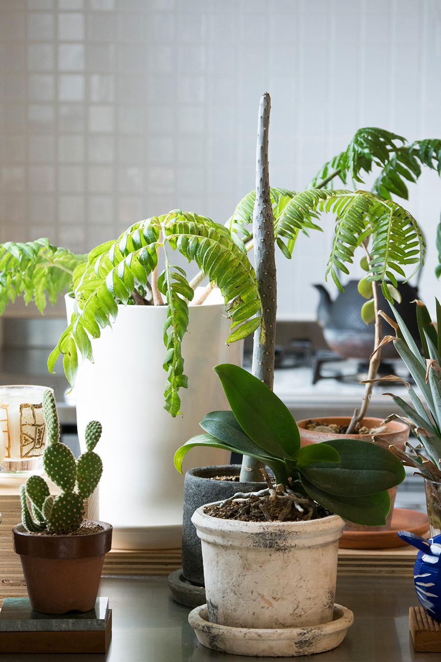 室内にもグリーンを欠かさない。日当りがよいので生育も良好。