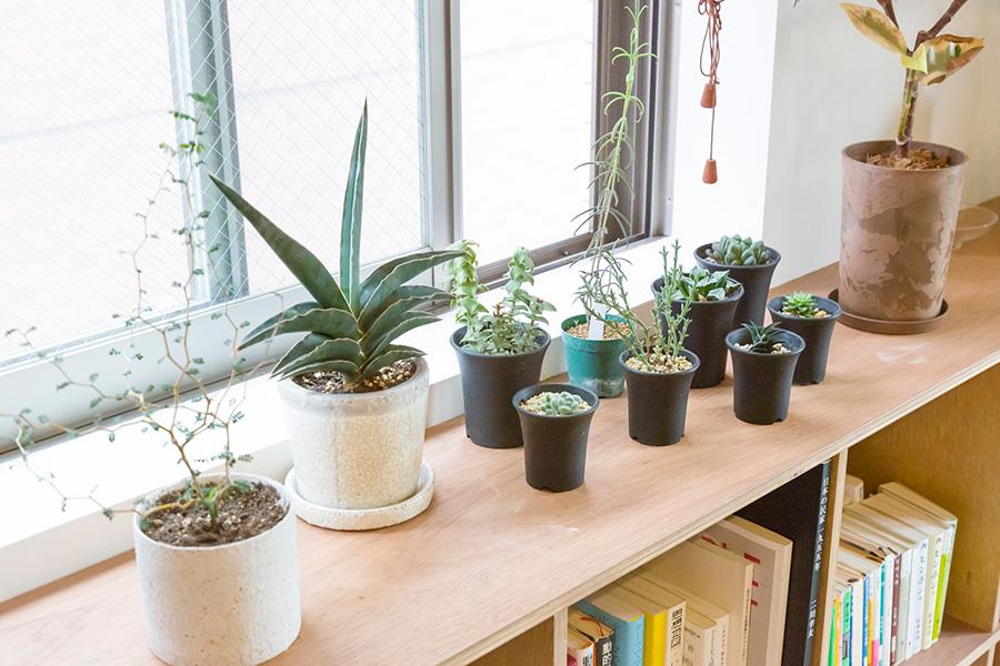 リビングの窓辺の多肉植物のコーナー。