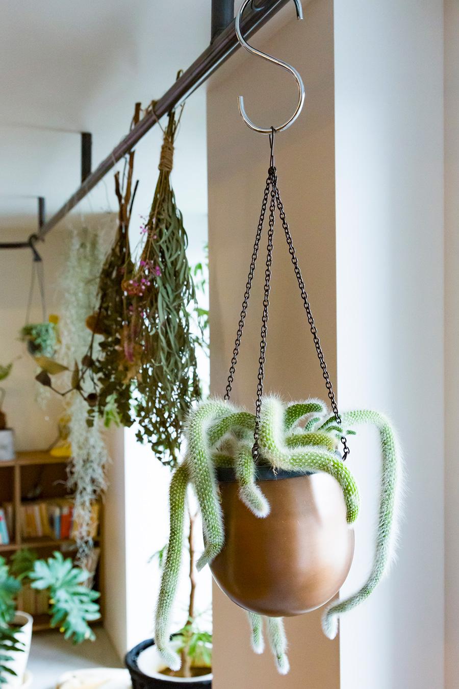 スチールのハンガーパイプは、植物をハンギングしたり、洋服を掛けたりと使い途もさまざま。