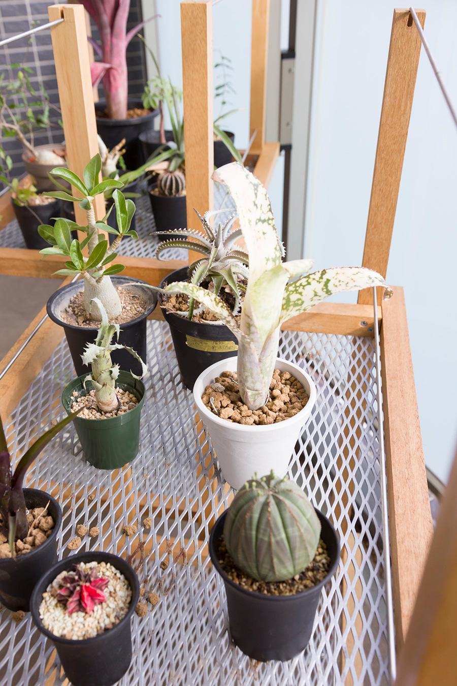ベランダの植物台。Aさん夫妻が佐々木さんと一緒につくったもの。