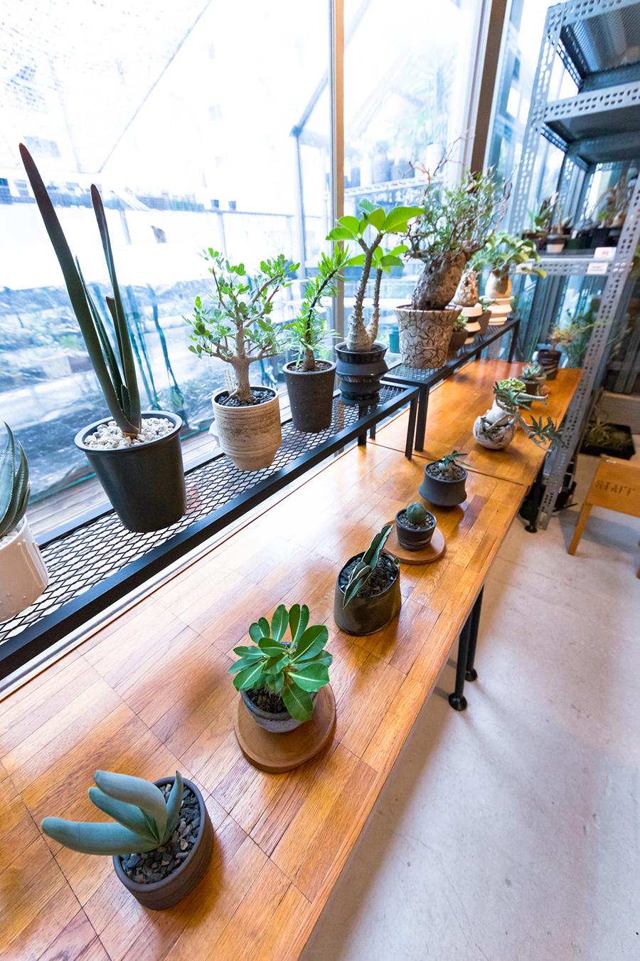 明るい窓辺に鉢に植えられた植物が並ぶ。