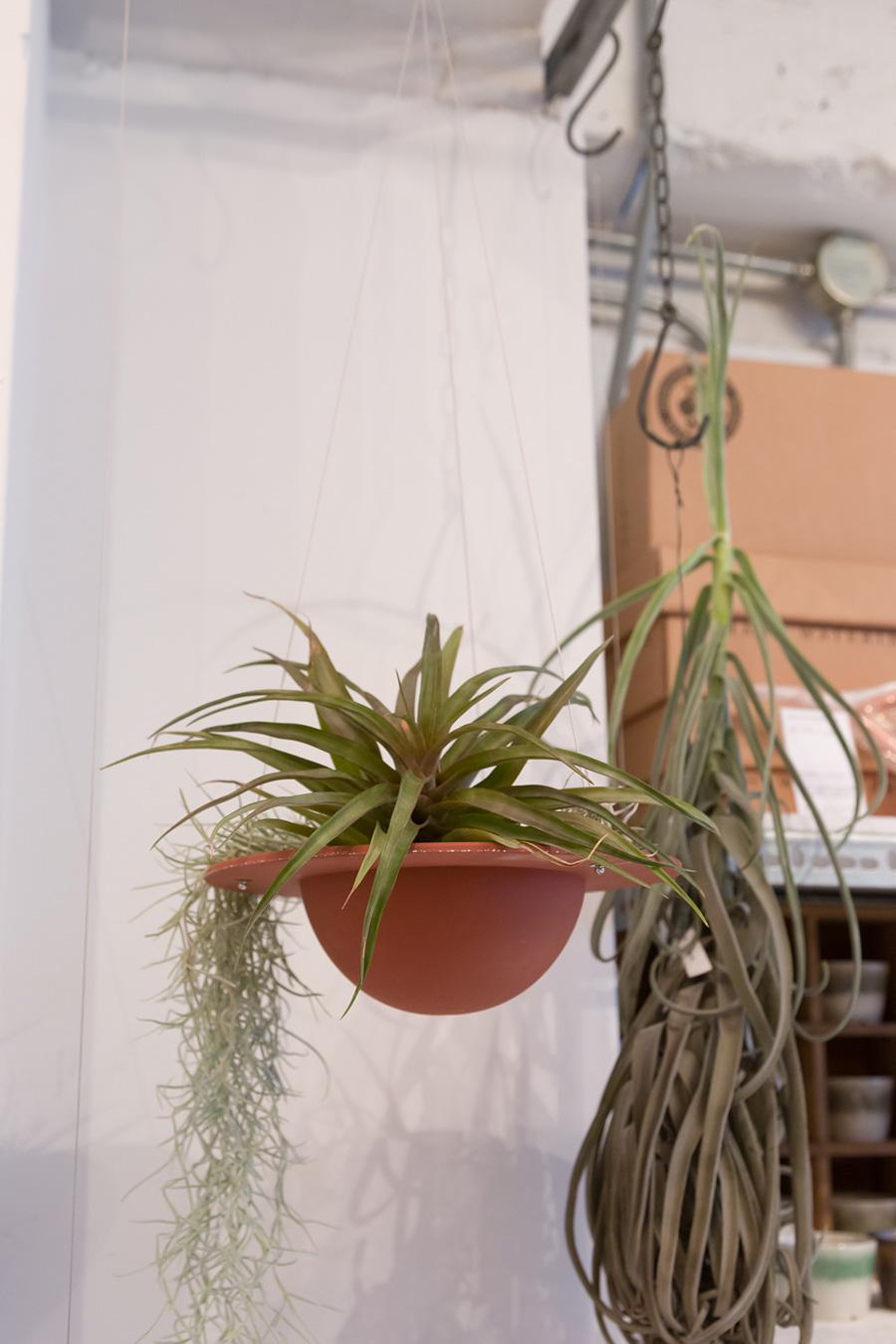 いざわせいとうによる、UFOのような形の鉢。鉢の肌がツルリとキメ細かいのは、赤土を高温で焼き締めているから。植物を植え込んでもいいし、エアプランツを置くだけでも様になる。