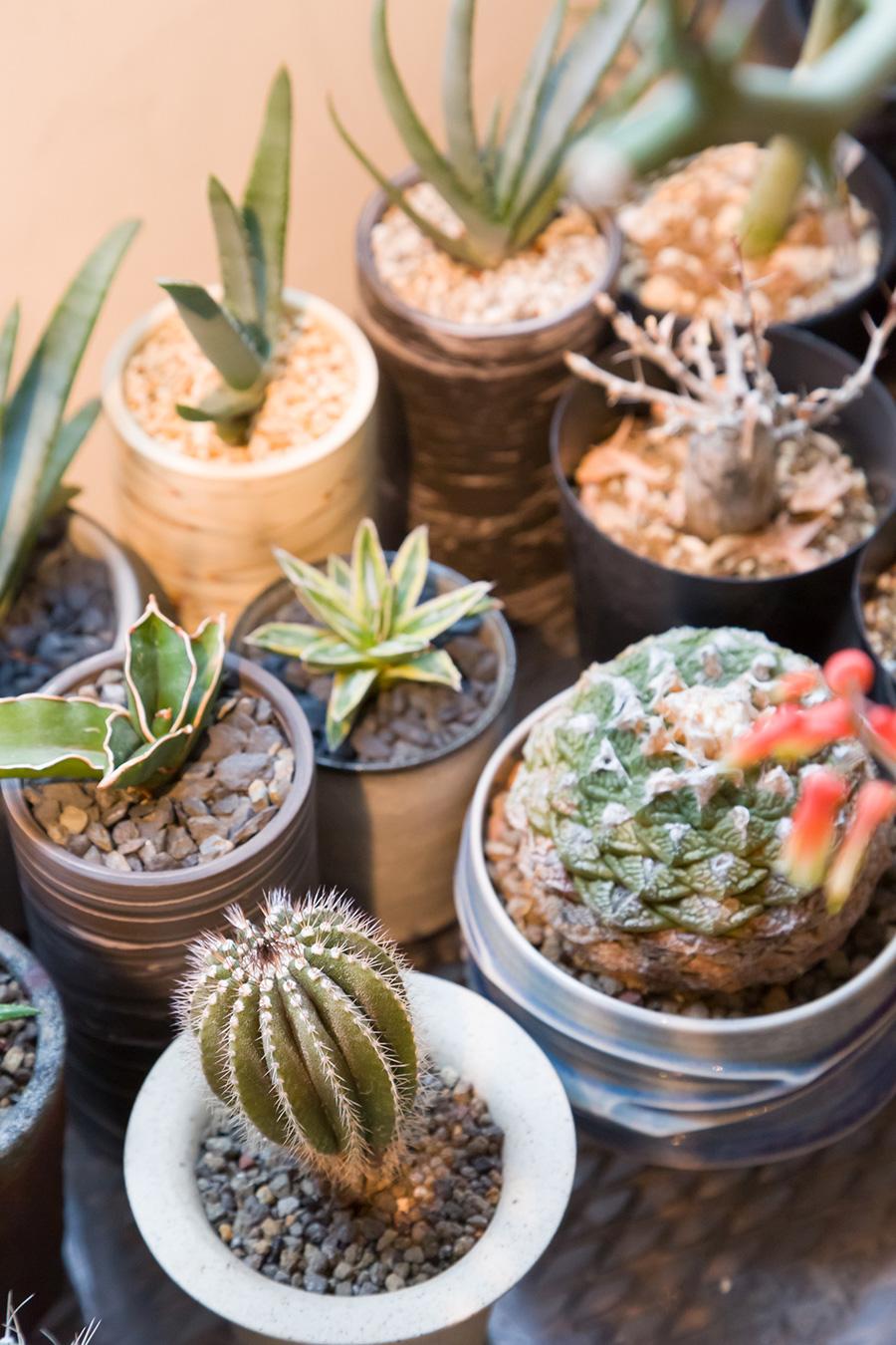 鉢と株の大きさのバランスの見極めが、植物を元気よく育てるポイントにもなる。「調子が悪いという相談を受けて写真を見せてもらうと、株に比べて土が多いという印象の鉢が多いです。あまり大きすぎないジャストサイズの鉢をオススメします」