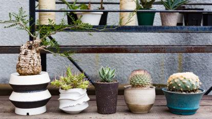 鉢を楽しむグリーンライフ 植物の存在感に負けない クールなポットを選びたい