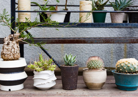 鉢を楽しむグリーンライフ植物の存在感に負けないクールなポットを選びたい