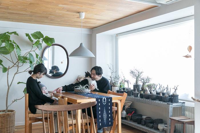 相田高史さん、祥子さん、いろ葉ちゃん、そしてツナちゃんの、3人+1匹の家族。ダイニングテーブルはアアルト。イスはペリアン。ペンダントライトはリサ・ヨハンソンパッペ。根塊植物を並べたスチールのラックは、パシフィック・ファニチャーでサイズオーダーしたもの。