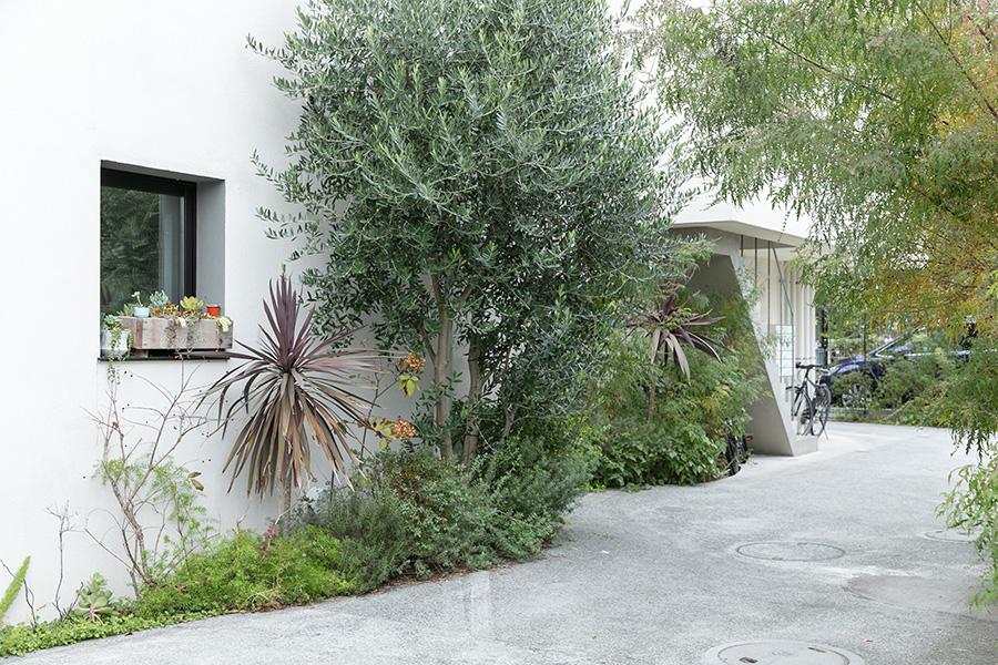 マンションの植栽はSOLSOが手がけている。「各住戸でシンボルツリーを決めて植えてもらいました」 左に見える正方形の窓が本浪宅のキッチンに面した窓。