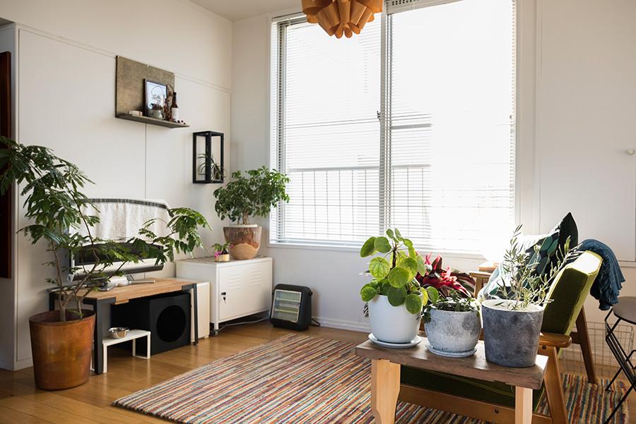 シックな色味が落ち着きを与えるリビング。テレビボードや壁のディスプレイはともみさんがDIY。日当りがよいので、エバーフレッシュやカラテア・トリオスターなどの観葉植物もよく育つ。