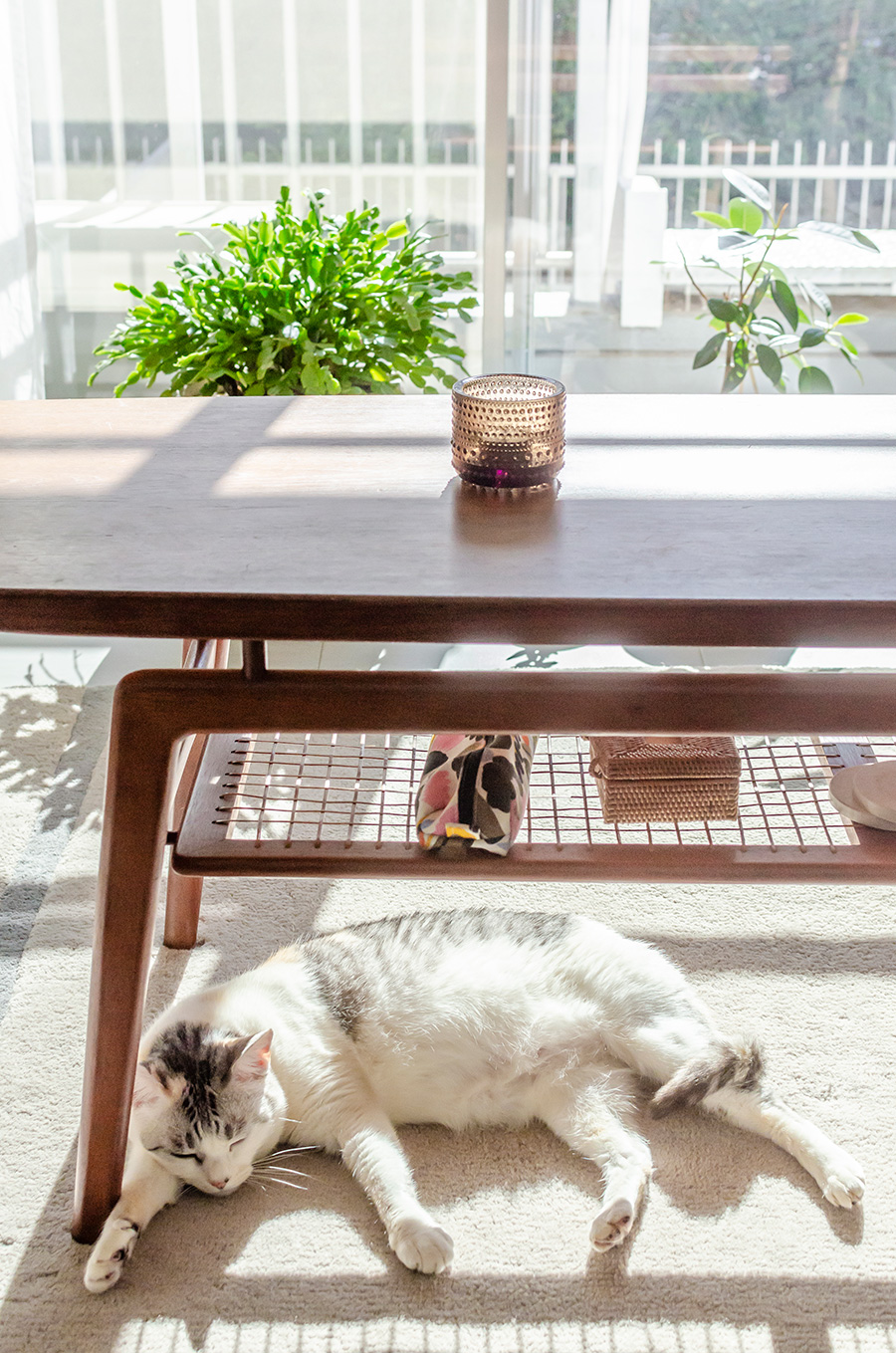 愛猫の〇〇は、デンマークでも共に暮らした。