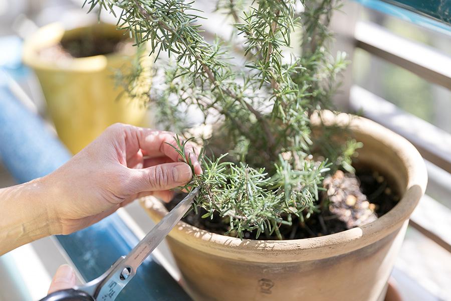 テラスでは、料理に使うさまざまなハーブを育てている。