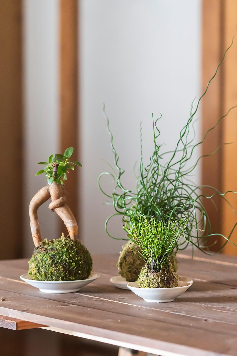常緑高木ガジュマル(左)と、螺旋の形状がおもしろいラセンイ(奥)、山野草ヒメトクサ(右)。器は作家・奥絢子さん作。