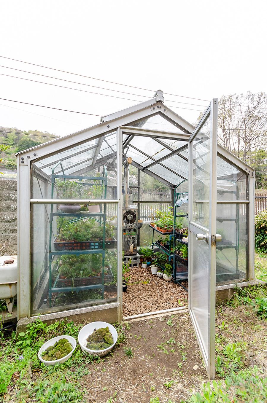アトリエは自然豊かな秦野市に。温かなハウスでミニ盆栽の苗が育てられている。