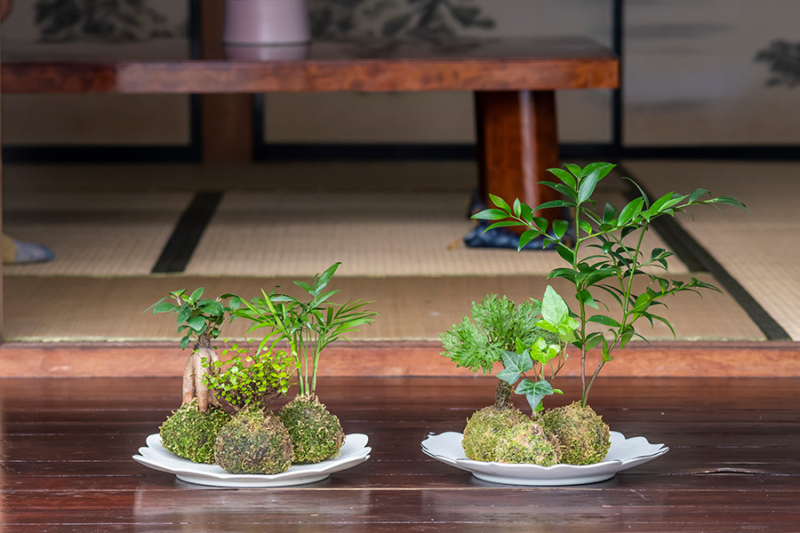 南国風のテーブルヤシやガジュマル、観葉植物のへデラ、ワイヤープランツなど。和はもちろん、洋風のインテリアにも映える。