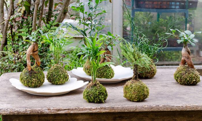 苔玉づくりに挑戦愛らしさと瑞々しさ癒しのグリーンをインテリアに