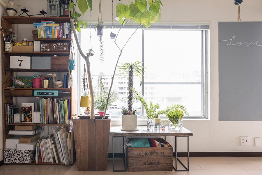 窓辺にはウンベラータを飾る。本棚はDIYで作り、ローテーブルは鉄工所にオーダーした脚に古材を載せた。