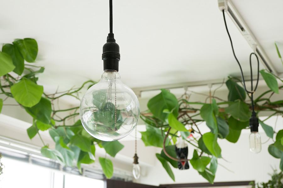 エジソンランプがグリーンにさり気なく溶け込む。