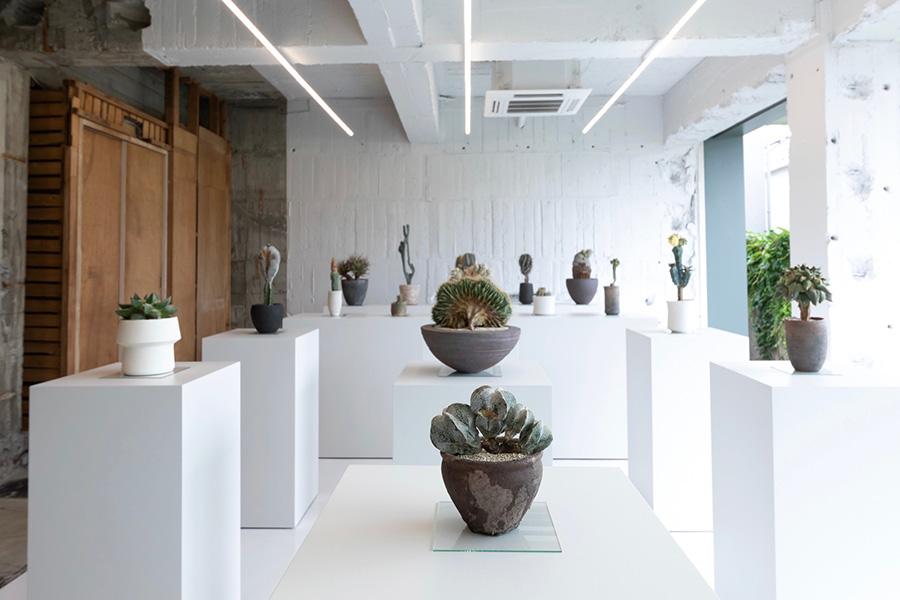 厳選された20点の個性的な植物が並ぶ。
