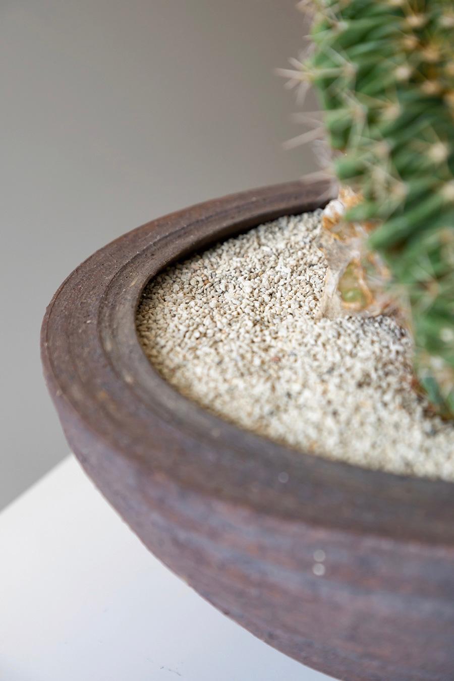 鉢は北九州の陶芸家 西村昂希さん。縁まで薄く仕上げられた緊張感のある鉢。