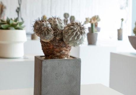 美術館のような植物屋一点物の植物と出合えるQusamura Tokyo