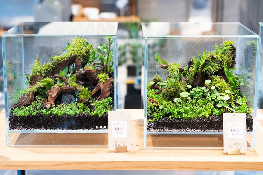 高い方から低い方へ流れる砂、植物の自生の様子など、自然界の様子を忠実に再現。うっそうと茂る熱帯のジャングルを思わせる。