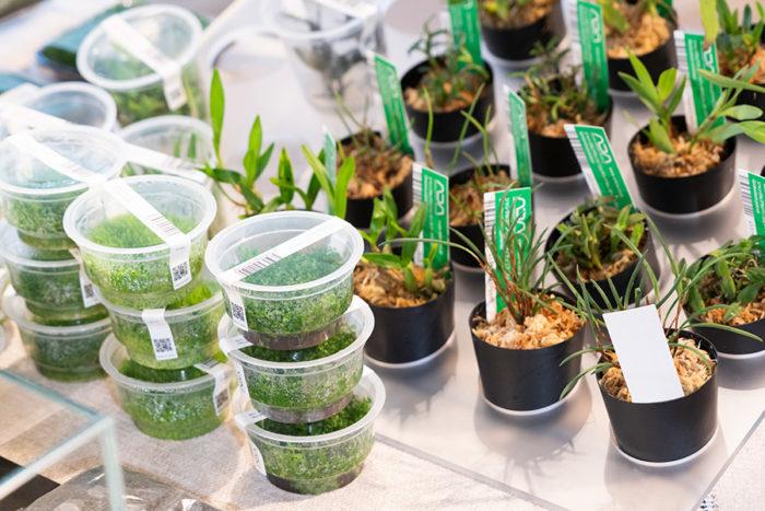 パルダリウムに使用する植物。様々な種類の中から組み合わせ、オリジナルを完成させることができる。