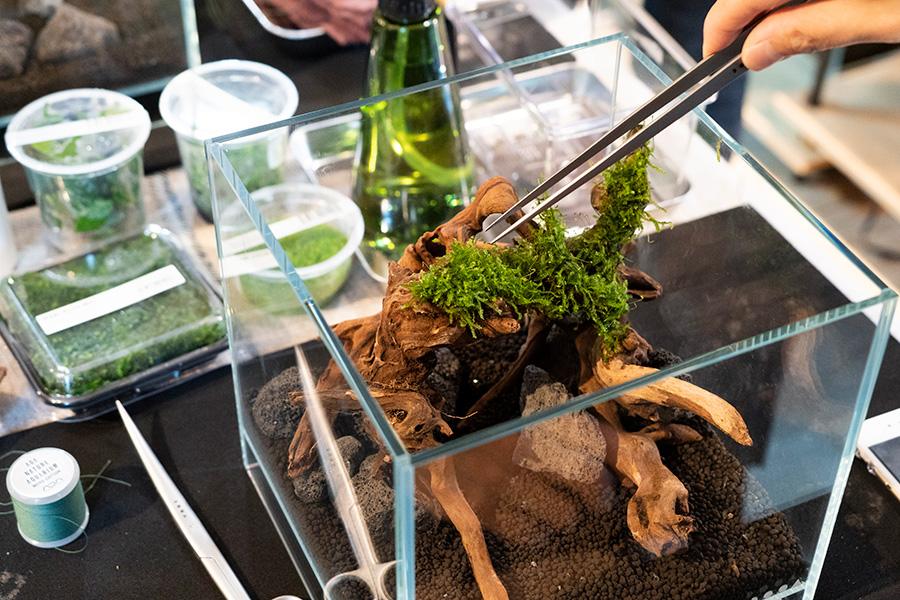 ④流木の平坦なところには、苔をそのまま載せていけばOK。