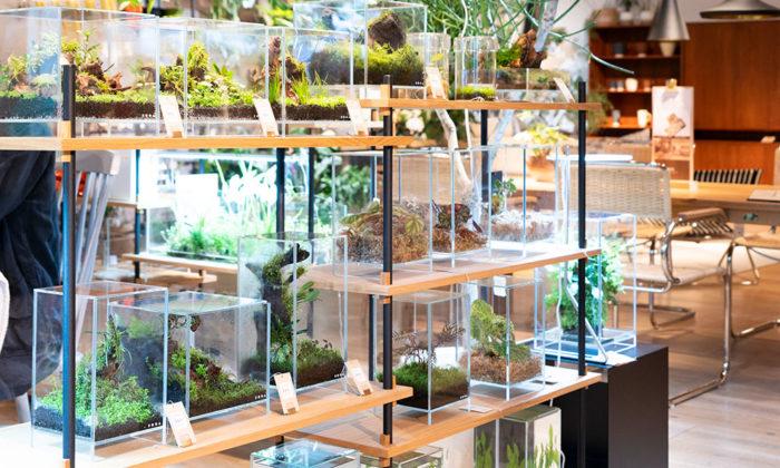 熱帯雨林をインテリアに自然界の様子を再現するパルダリウムを制作