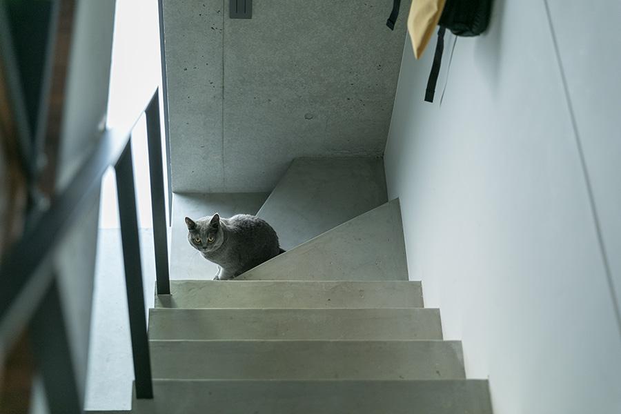 1階に降りますか? ぶーちゃんが階段をリード。
