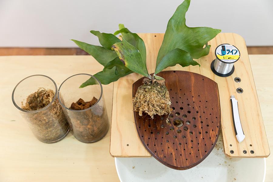 用意するもの:左から、水苔、ベラボン、ビカクシダ(ヒリー)、プレート、テグス、カッター。