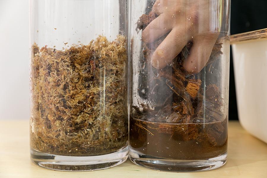ベラボンと水苔は水に浸しておく。