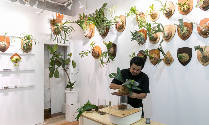ビカクシダを壁に飾る存在感のあるビカクシダを板付きにする方法を学ぶ