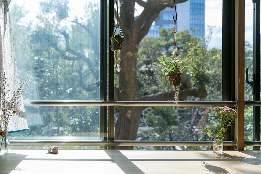 カーテンレールにグリーンを吊るし、外と中の緑をつなぐ。
