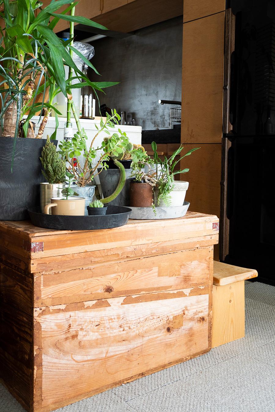 古道具屋さんで買った茶箱をグリーンの飾り棚に。「古道具が大好きなんです」。