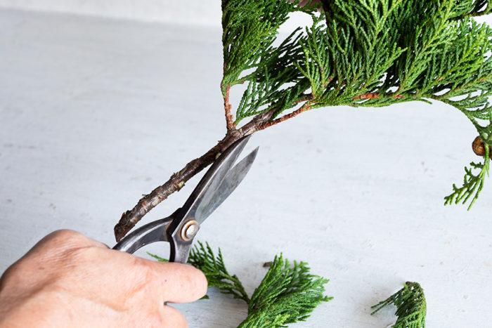 枝の下の方をハサミか手で外していく。生のときはハサミを使うのがおすすめ。