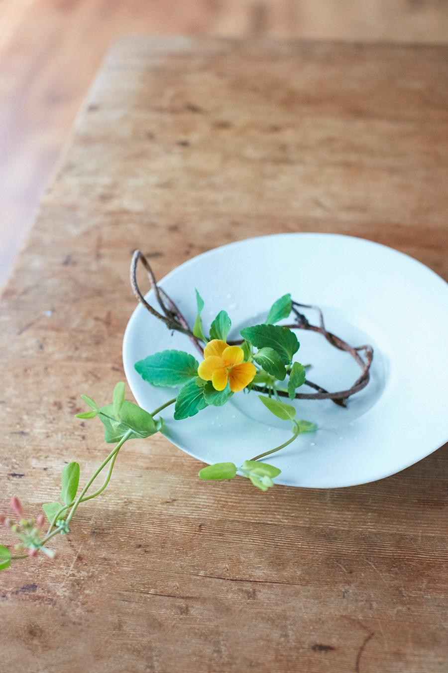 白いお皿に、ビオラとアケビ、ニンドウを生ける。お皿の余白を残して生ける。日常の器と花、その両方が引き立つ。